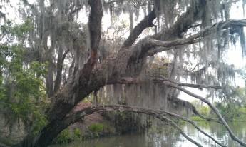 Louisiana Swamp March 2013