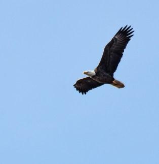 eagle3_blog