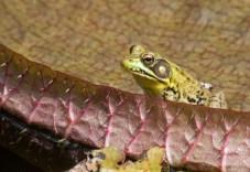frog3_pad_blog