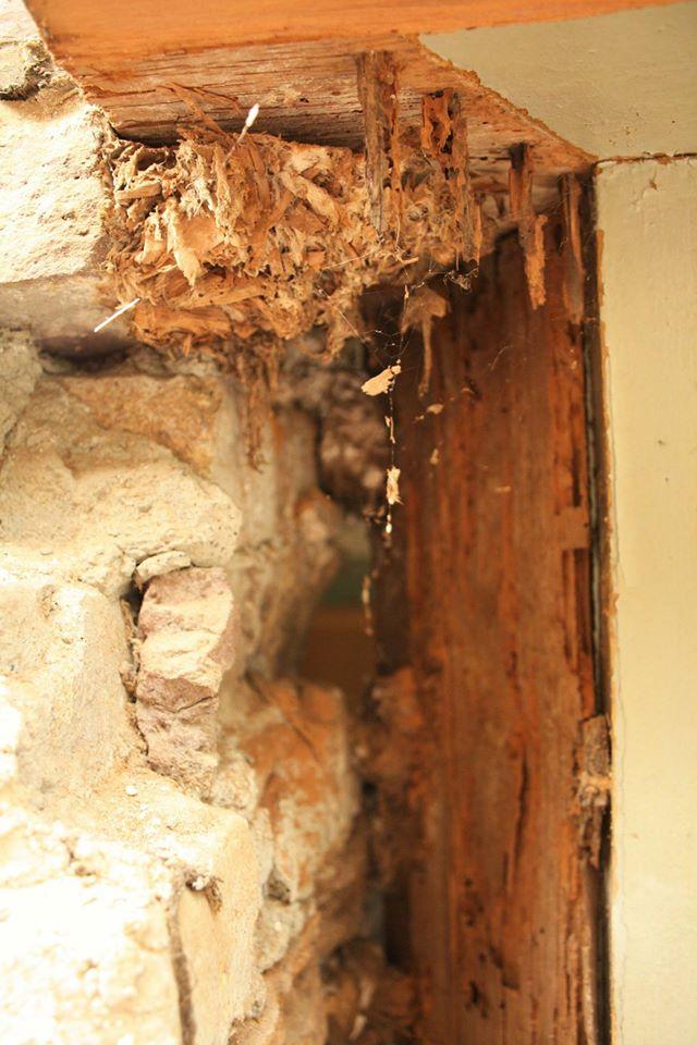 Aangetast hout - Foto: An Raes