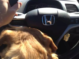 Defensive Driving Fail: I will never drive with the dog on my lap again.