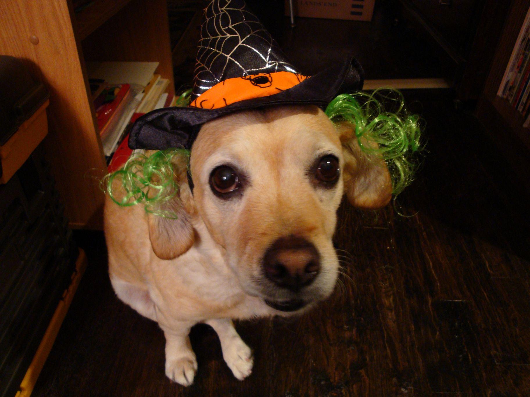 Halloween Casey 2009  [50%]