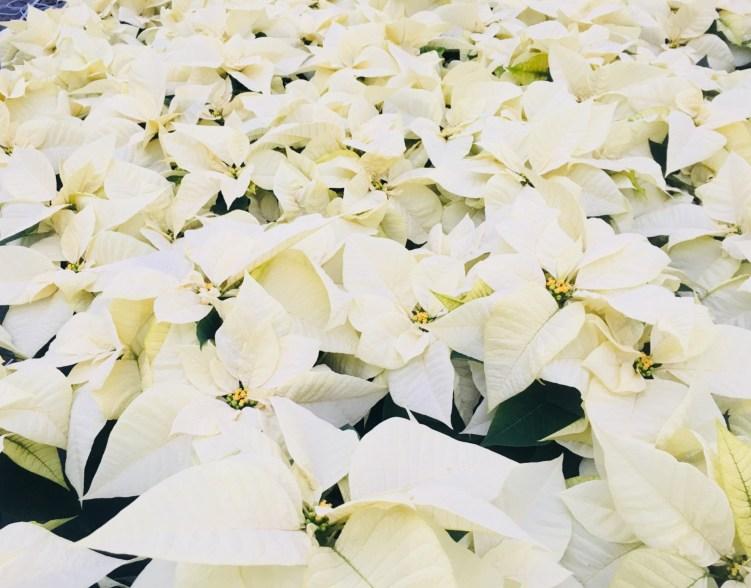 White 6.5'