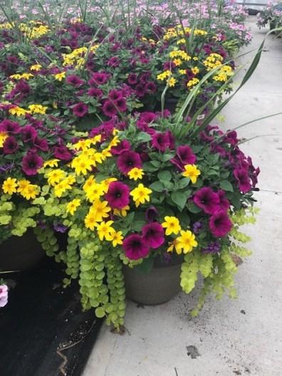 Spring at Michael's