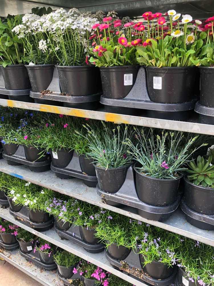 1 Gallon Perennials