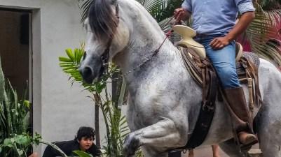 Dancing equine - el baile del caballo