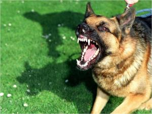 Can a Landlord Be Held Responsible for a Dog Bite Inflicted by a Tenant's Dog?