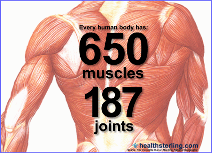 muscles-and-joints