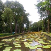 Explore The Sir Seewoosagur Ramgoolam Botanical Garden - michalah francis