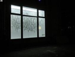 bluszcz, 2011, Witryna, Warszawa