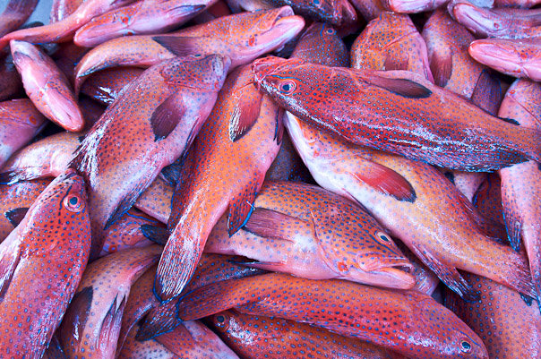 Egzotyczne ryby na bazarze na Cabo Verde