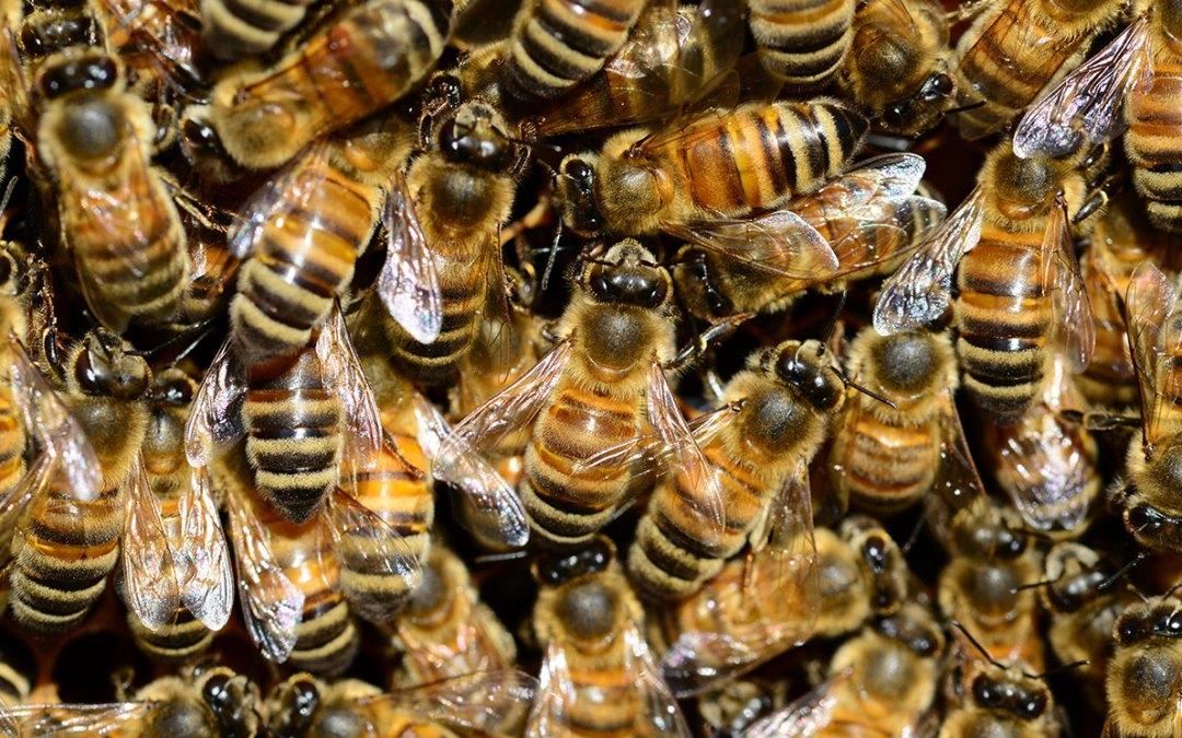 O pszczołach, bzykaniu i innych zwierzętach
