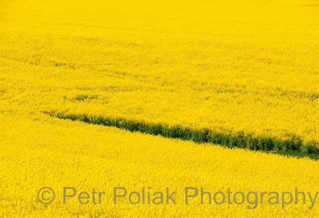 Fields – Czech Republic