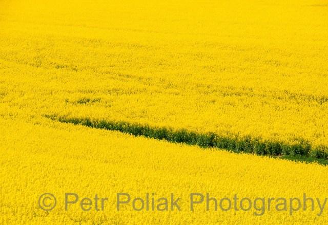 Fields –Czech Republic