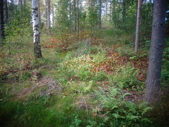 Bosque Finlandia