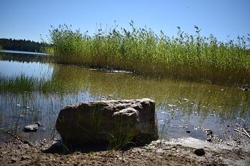 insectos lagos