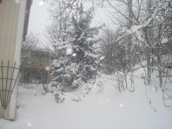 nevada copiosa