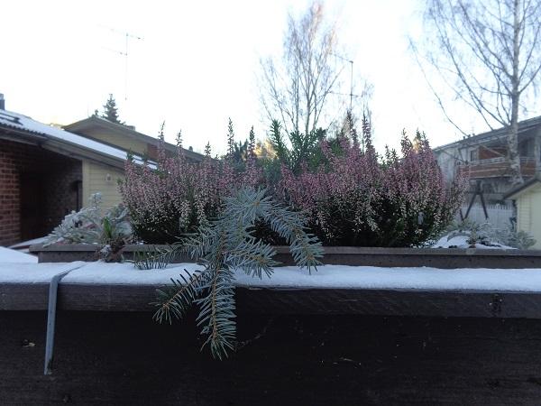 Plantas Nieve