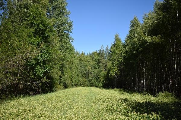 bosque zona caza