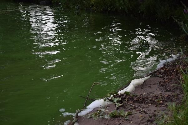 Cianobacteria lago Finlandia