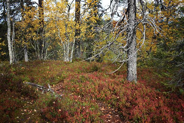 Derecho de cada hombre naturaleza bosque