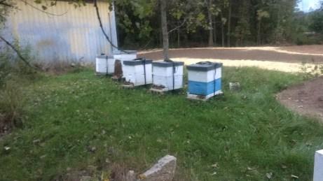 RCs Bees-4