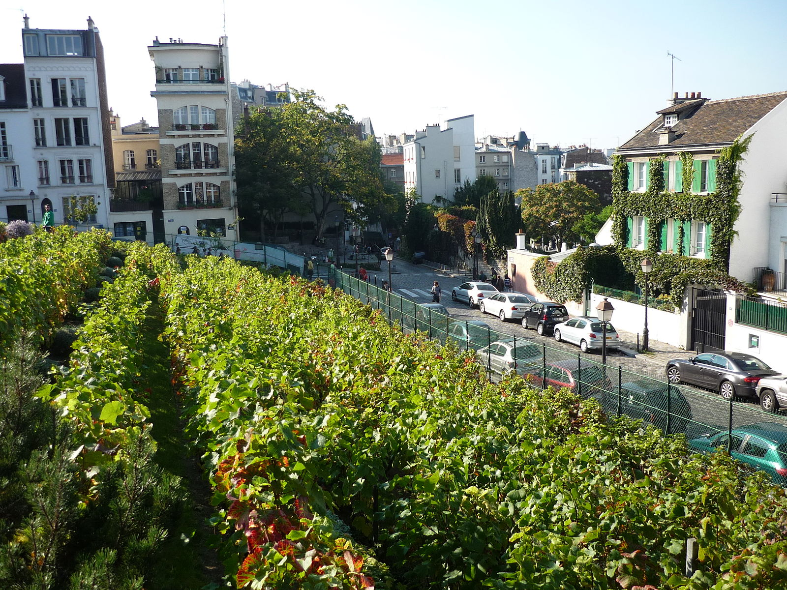 Basili [CC BY-SA 3.0 (https://creativecommons.org/licenses/by-sa/3.0)], Vigne de Montmartre, Michel Kalifa - Maison David
