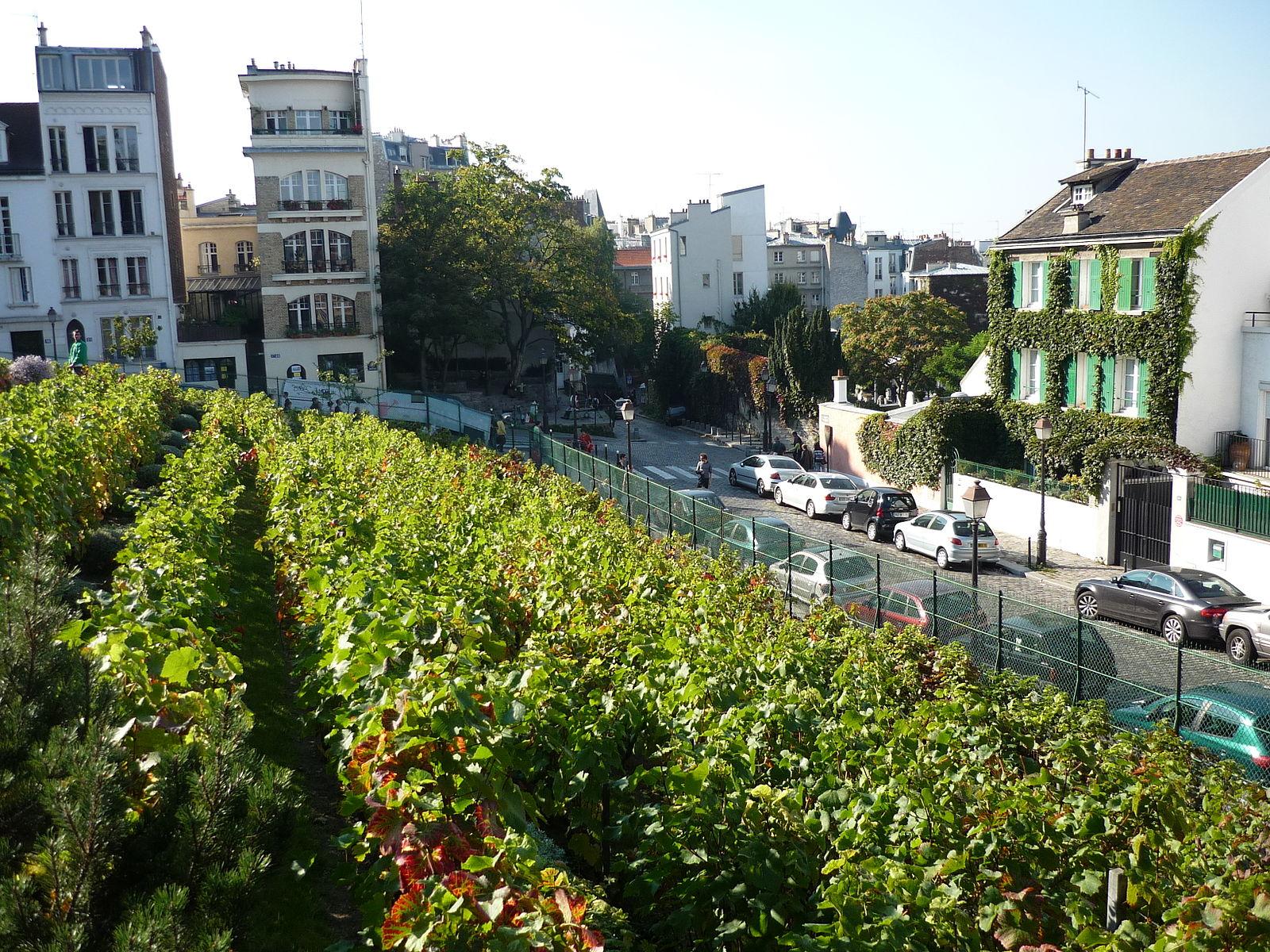 Basili [CC BY-SA 3.0 (https://creativecommons.org/licenses/by-sa/3.0)], Vigne de Montmartre, Michel Kalifa - Maison David