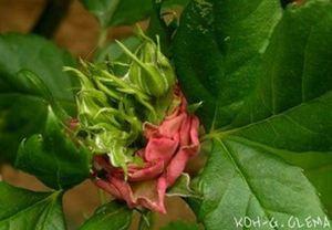 Mutation accélérée sur les plantes de Fukushima.