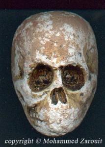 En juillet 2005 M. Mohammed Zaraouit a découvert dans une carrière de marbre à Tafilalet ( Maroc ), dans une couche géologique du dévonien un petit crâne fossilisé d'un primate qui devait être bipède et âgé de 360 millions d'années !