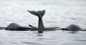 Baleines 001
