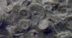 Quelles explications nous fournira la science officielle sur ces engrenages préhistoriques?