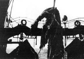 Le 25 avril 1977, au large de la Nouvelle-Zélande un bateau de pêche japonais a remonté dans ses filets cette étrange créature marine à l'allure d'un plésiosaure. Cette carcasse était dans un tel état de décomposition qu'après une étude sommaire par l'équipage et les quelques scientifiques qui étaient à bord, elle dut être rejetée à la mer...  Dommage...