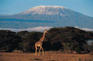 mont Kilimandjaro  002