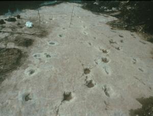 Découvertes en 1908 dans les lits du Fleuve Paluxy, près de Glen Rose, Texas.des empreintes fossilisées d'humanoïdes géants de 4 mètres de hauteur, mélées à des traces de dinosaure de 120 à 130 millions d'années font l'objet d'une grande controverse . une telle découverte contredirait radicalement la géologique conventionnel.