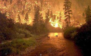Les  immenses incendies de forêts au nord de la Saskatchewan  au Canada,ainsi qu'aux États-Unis et en Australie sont directement lié au réchauffement climatique./ The huge forest fires in northern Saskatchewan in Canada and the United States and Australia are directly related to global warming./