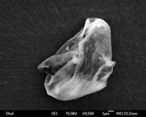 La récolte extra-terrestre   En 2013, quand des scientifiques britanniques ont lancé un ballon dans la stratosphère, ils ont été étonnés de constater qu'à son retour, il contenait de minuscules organismes vivants. Les scientifiques croient que ces organismes ne peuvent pas venir d'ailleurs que de l'espace