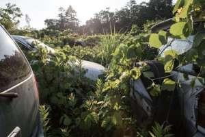 Des voitures ,des motos et  autres  items envahis par la végétation.