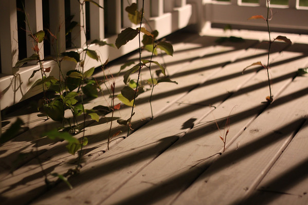 Day 108  I guess I was feeling creative after spending some time with photography club friends this evening and was inspired by the light and lines on my front porch.  Yes, we have a vine growing through our front porch.  We have lattice on the front we will have to remove to get to the plant's roots.  50mm  Manual  f/1.8  1/10sec (I was leaning against the wall)  ISO400  I'm not sure the focus is good, but I like the exposure and the composition.  What do you think?