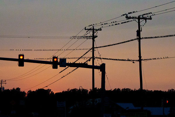 Day 220  birds on wires at an intersection nearby  50mm  Manual  ISO3200  f/11  1/500sec