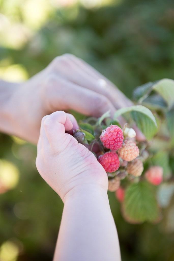 Fun with Kids: Picking Raspberries