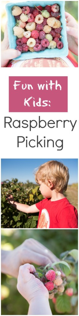 Fun with Kids: Picking Raspberries. Picking your own fruit is a great activity to do with kids of all ages.