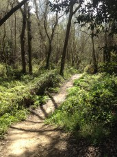 The trail going through the woods...