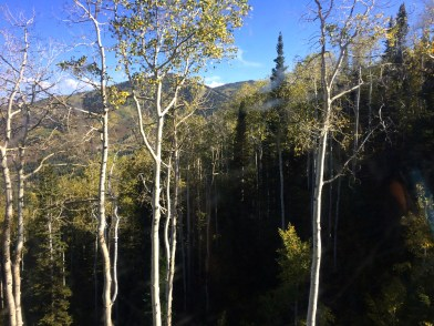 Trees as seen from Gondola.