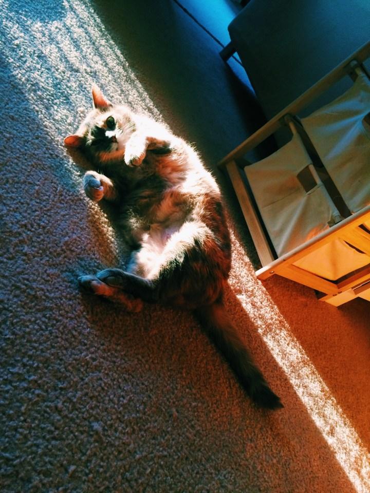 Catching the sun's rays.