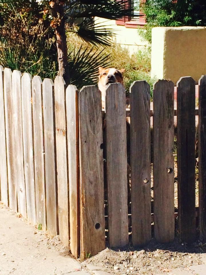 Cute barking dog.