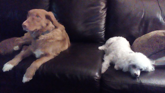 Dogs - Peanut and Newton