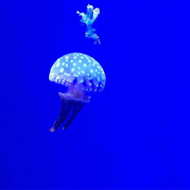 From earlier in the week  jellyfish wonder