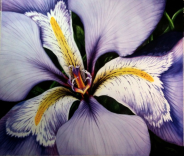 Purple iris watercolor painting by michelle east