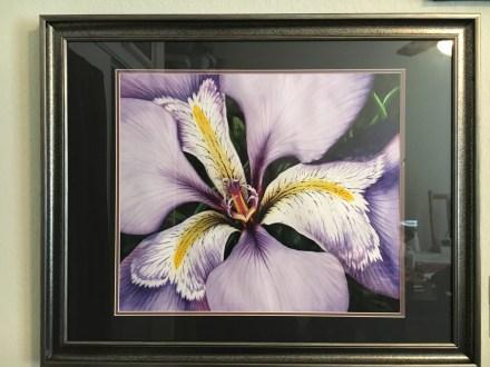 Louisiana Iris watercolor painting